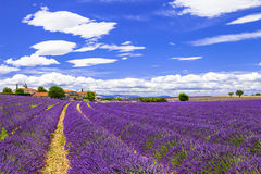 Lavander in Provance, France Stock Images