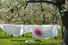 Lavanderia di secchezza in un frutteto di frutta, Paesi Bassi Fotografie Stock