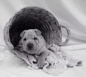 Lavanderia do cachorrinho Imagem de Stock Royalty Free