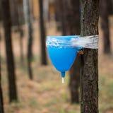 Lavandino su un albero Fotografie Stock Libere da Diritti