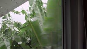 Lavando la finestra a casa Concetto di funzioni e di lavori domestici stock footage