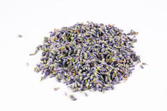 Lavandula angustifolia in white background Royalty Free Stock Images