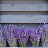 Lavandula blüht Blumensträuße Stockbild