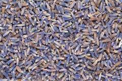 Lavandulaangustifolia för torkad organisk riktig lavendel eller för engelsk lavendel Royaltyfri Bild