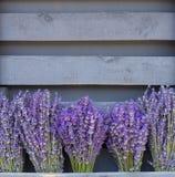 Lavandulaen blommar buketter Fotografering för Bildbyråer