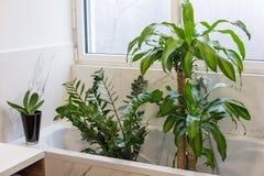 Lavare le piante d'appartamento Immagine Stock