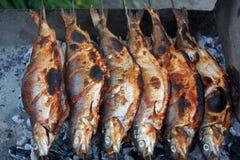 Lavaretus de água doce do Coregonus do peixe branco no lago Sevan Imagens de Stock
