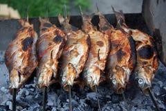 Lavaretus de água doce do Coregonus do peixe branco no lago Sevan Imagem de Stock Royalty Free