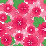 Lavater flowers seamless pattern Royalty Free Stock Photo