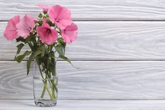 Lavater pink flowers in a glass. Vase Royalty Free Stock Photos