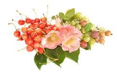 lavatera czereśniowy agrestowy cukierki Fotografia Stock