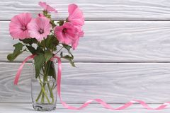 Lavatera pink flowers in a glass vase. Against a wooden wall Royalty Free Stock Images