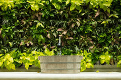 Lavatory. Out door Lavatory and Ornamental plants wall royalty free stock images
