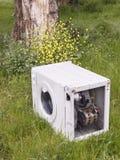 Lavatrice abbandonata in natura Fotografia Stock Libera da Diritti