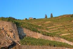 lavaux瑞士葡萄园 免版税库存照片