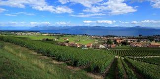lavaux瑞士露台的葡萄园 免版税库存照片
