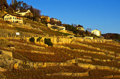 Lavaux葡萄园,瑞士 免版税库存照片