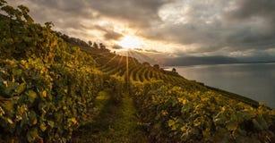 Lavaux,瑞士-葡萄园大阳台日出II 图库摄影