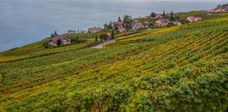 Lavaux,瑞士-葡萄园大阳台II 库存图片