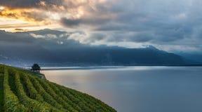 Lavaux,瑞士-葡萄园大阳台IV 免版税图库摄影