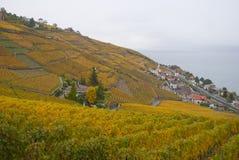 Lavaux: αμπελώνες φθινοπώρου Στοκ Εικόνες