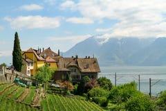 Lavaux Швейцария на женевском озере Стоковая Фотография RF