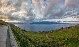 Lavaux, Швейцария - панорамный взгляд II Стоковые Изображения