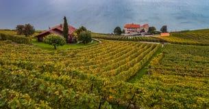 Lavaux, Швейцария - террасы виноградника i Стоковые Изображения RF