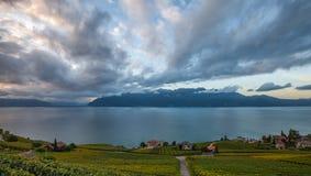 Lavaux, Швейцария - террасы виноградника v Стоковая Фотография RF