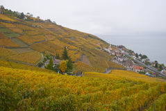 Lavaux : 秋天葡萄园 库存图片