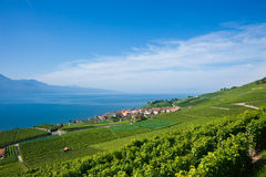 Lavaux Royalty Free Stock Photos