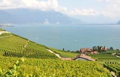 Lavaux against Geneva lake, Switzerland Stock Images