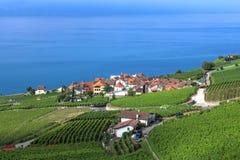 Lavaux, die Schweiz lizenzfreie stockfotografie