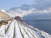 Lavaux i vinter med Snow Royaltyfria Bilder