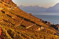 Lavaux - la Svizzera immagine stock libera da diritti