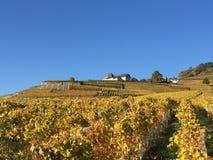 Lavaux, la UNESCO, viñedos, Vilette, Suiza foto de archivo