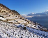 Lavaux nell'inverno con neve Immagine Stock