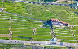 Lavaux Region Stockbilder