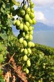 Lavaux region against Geneva lake, Switzerland Stock Photo