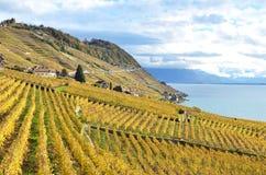 Lavaux-Region, die Schweiz Stockfotos
