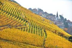 Lavaux Region, die Schweiz Lizenzfreie Stockfotos
