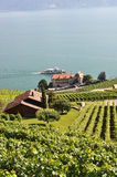 Lavaux region, Switzerland Stock Photos