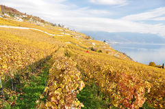 Lavaux region, Switzerland Stock Photo