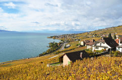 Lavaux region, Switzerland Royalty Free Stock Image
