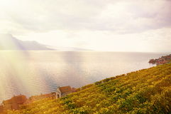 Lavaux region, Switzerland Stock Images