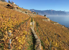 Lavaux region, Switzerland royalty free stock images