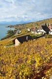 Lavaux region, Szwajcaria Zdjęcia Royalty Free