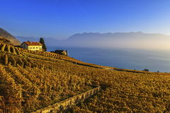 Lavaux region, Vaud, Switzerland stock images
