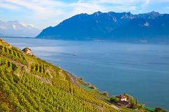 Lavaux region Stock Photos