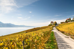 Lavaux roads. A road in the middle of vineyard in Switzerland, with lake of Geneva near Stock Photos